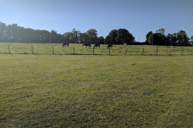 four horses in a field, Brades Acre Camping Site, Stonehenge, Wiltshire, Salisbury, camping, holiday lodges
